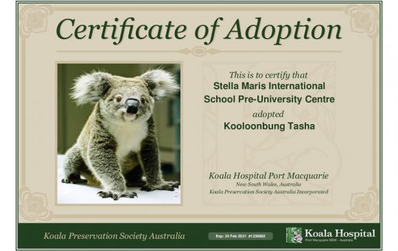 Fundraising for Koalas